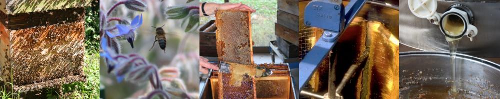 Musée vivant de l'apiculture